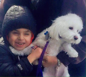 """Have You Seen This Dog? Staten Island Family Fears Missing Maltese """"Charlie"""" Has Been Stolen"""
