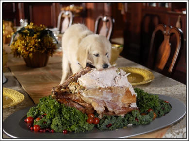 Gobble! Gobble! Thanksgiving Pet Safety