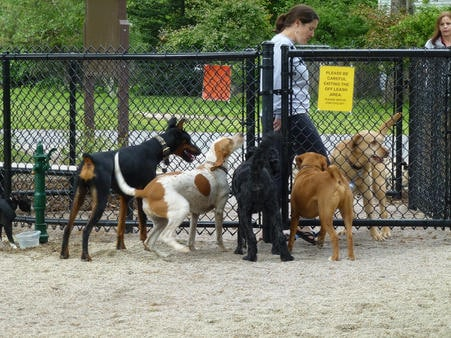 Dog Park Etiquette – What You Need To Know